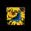 加拿大2014紅紫色斑點蝴蝶銀幣1盎司_27244